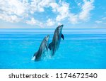 Couple Dolphins Jumping On The...
