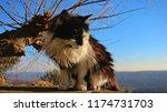 Graceful Cat In Beautiful Nature