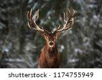Noble Deer Male In Winter Snow...