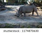 rhinoceros  'rhino'  is one of... | Shutterstock . vector #1174870630