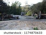 rhinoceros  'rhino'  is one of... | Shutterstock . vector #1174870633
