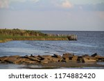 Northshore of Lake Pontchartrain near New Orleans, Louisiana - Marsh, Swamp, and Bayou - Fontainebleau State Park