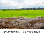 old big log and green rice field | Shutterstock . vector #1174915036