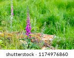 beutyful thimble in the high... | Shutterstock . vector #1174976860