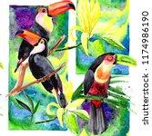 beautiful birds toucans on a...   Shutterstock . vector #1174986190