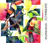 beautiful birds toucans on a...   Shutterstock . vector #1174986193
