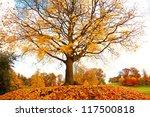 beautiful  autumnal maple tree... | Shutterstock . vector #117500818