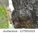 yellowish reddish lizard ... | Shutterstock . vector #1175051023