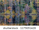 lake with deciduous forest... | Shutterstock . vector #1175051620