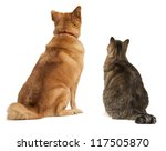Stock photo cat and dog looking up add your text above 117505870