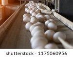 chicken eggs go through the... | Shutterstock . vector #1175060956