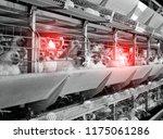 chicken coop with infected... | Shutterstock . vector #1175061286