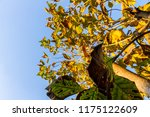 the branches of tree stand... | Shutterstock . vector #1175122609
