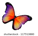 Violet Yellow Butterfly On...
