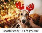girl putting on cute dog... | Shutterstock . vector #1175193400