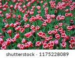a lot of flowers | Shutterstock . vector #1175228089