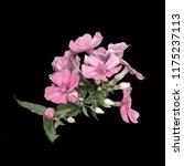 fine art still life color... | Shutterstock . vector #1175237113