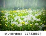 A Meadow Of Dandelion Flowers.