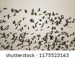 thousands of geese  bean goose... | Shutterstock . vector #1175523163