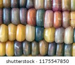 Flint corn also known as indian ...