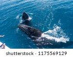 whale watchers observing a pair ... | Shutterstock . vector #1175569129