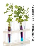test tubes with a colorful... | Shutterstock . vector #117558550