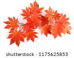 autumn maple leaves | Shutterstock . vector #1175625853