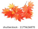 autumn maple leaves | Shutterstock . vector #1175626870