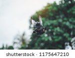 pigeons are flying out of food... | Shutterstock . vector #1175647210