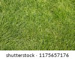 top view of beautiful green... | Shutterstock . vector #1175657176