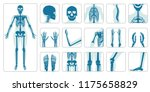 human bones orthopedic and... | Shutterstock .eps vector #1175658829