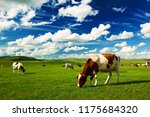 The Cattle On The Hulunbuir...