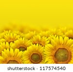 Beautiful Yellow Sunflower...