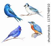 watercolor blue birds. | Shutterstock . vector #1175748910