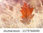 autumn leaf in the frost. oak... | Shutterstock . vector #1175760040