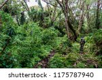 volcanoes national park  ... | Shutterstock . vector #1175787940