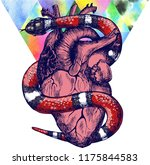 lampropeltis triangulum and... | Shutterstock . vector #1175844583
