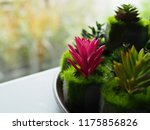 cactus plant background. | Shutterstock . vector #1175856826