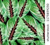 leaves of houseplant maranta... | Shutterstock . vector #1175859250