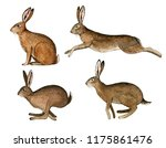 Stock photo wild hare set watercolor hand painted illustration 1175861476