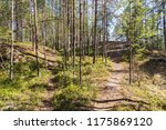 landscape in the northern... | Shutterstock . vector #1175869120