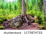 forest tree roots view. forest... | Shutterstock . vector #1175874733