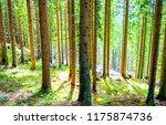 forest trees sunlight...   Shutterstock . vector #1175874736