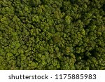 dense deciduous forest aerial... | Shutterstock . vector #1175885983