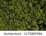 dense deciduous forest aerial... | Shutterstock . vector #1175885986