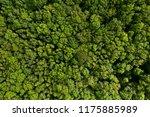 dense deciduous forest aerial... | Shutterstock . vector #1175885989