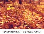Fallen Leaves Background  ...