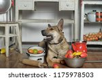 dog assistant in the kitchen... | Shutterstock . vector #1175978503