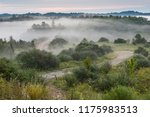 morning fog covers the growing... | Shutterstock . vector #1175983513