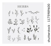 the retro style herbs | Shutterstock .eps vector #1175989600